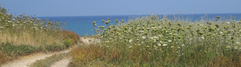 South of Caesarea on the Israel Trail