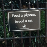 """Feed a pigeon, breed a rat"" NY park sign"
